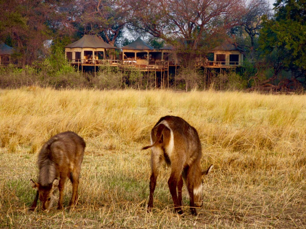 Nambwa_tented_lodge